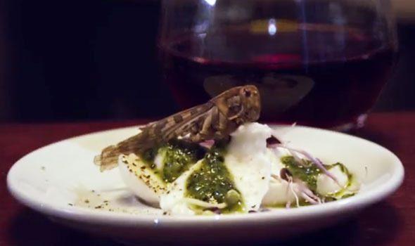 Festin-Nu: il ristorante parigino dove si mangiano insetti