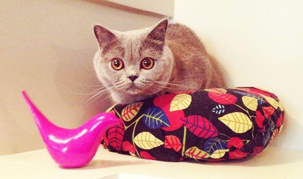 Aristide: l'hotel per gatti di Parigi
