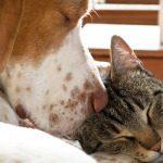 Gattili e Canili: dove adottare un amico a 4 zampe a Parigi
