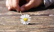Le 35 più belle frasi e citazioni francesi sulla vita