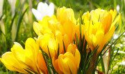 5 cose (un po' insolite) da fare in primavera a Parigi