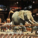 Il Museo Nazionale di Storia Naturale a Parigi, un tuffo nella natura per adulti e bambini