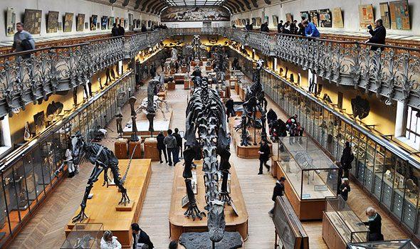 La Galleria di Paleontologia e Anatomia Comparata a Parigi: evoluzionismo, arte e storia