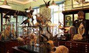 La Maison Deyrolle, un negozio unico al mondo!