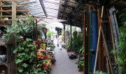 mercatino-fiori-uccelli-parigi