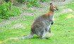 wallaby-rambouillet-parigi