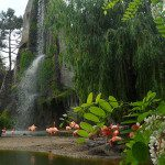 Lo storico Zoo di Parigi, un viaggio tra la savana e la pampa