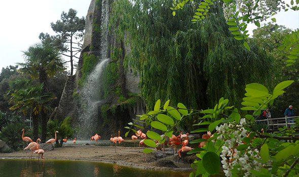 zoo-parigi-vincennes