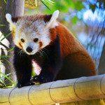 La Ménagerie du Jardin des Plantes, uno degli zoo più antichi ed affascinanti del mondo