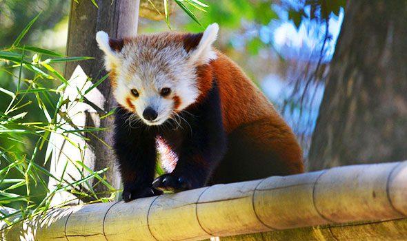 La Ménagerie du Jardin des Plantes, uno degli zoo più antichi ed affascinanti al mondo