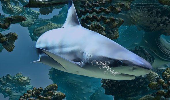 L'histoire des requins (La storia degli squali)