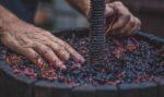 Il Museo del Vino di Parigi: un giro tra i sapori della tradizione francese