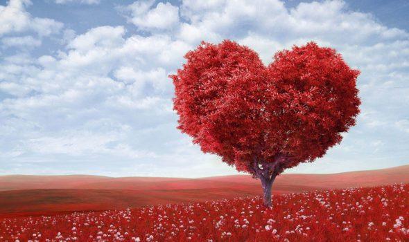 Le 20 Più Belle Frasi Damore In Francese Da Usare A San Valentino