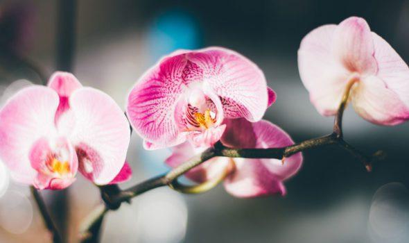Mille et une Orchidées 2019