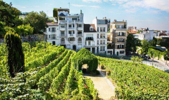 Clos Montmartre: l'antica Vigna sulla collina più famosa di Parigi